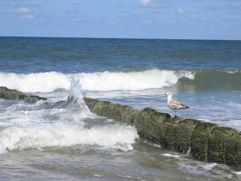 Möwe wartet auf Welle