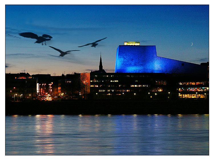 Möwen abends vor der Bonner Oper