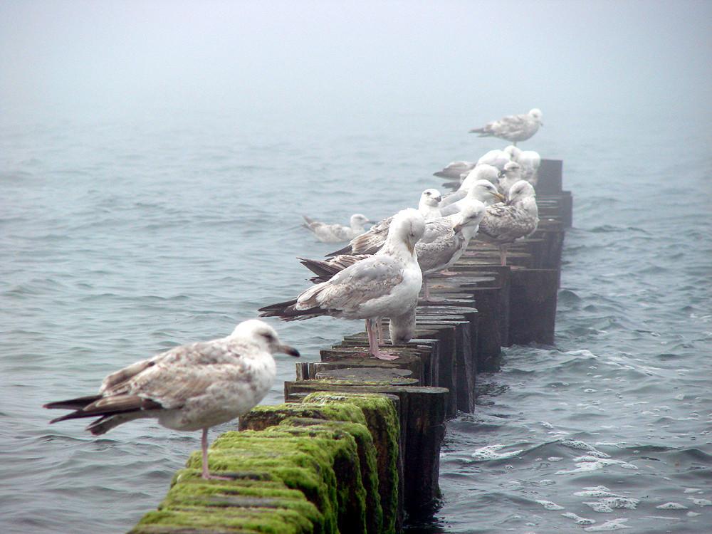 Möwen an der kalten Ostsee
