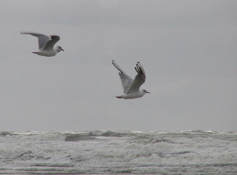 Möwen an der Nordsee