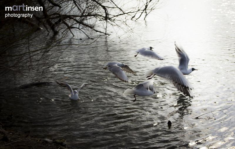 Möwen bei Kirchsee