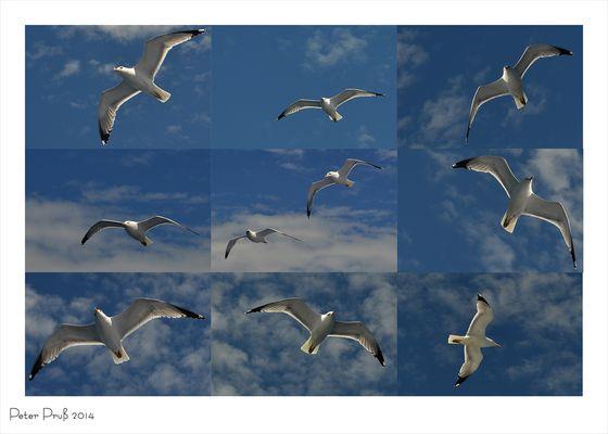 Möwen-Collage