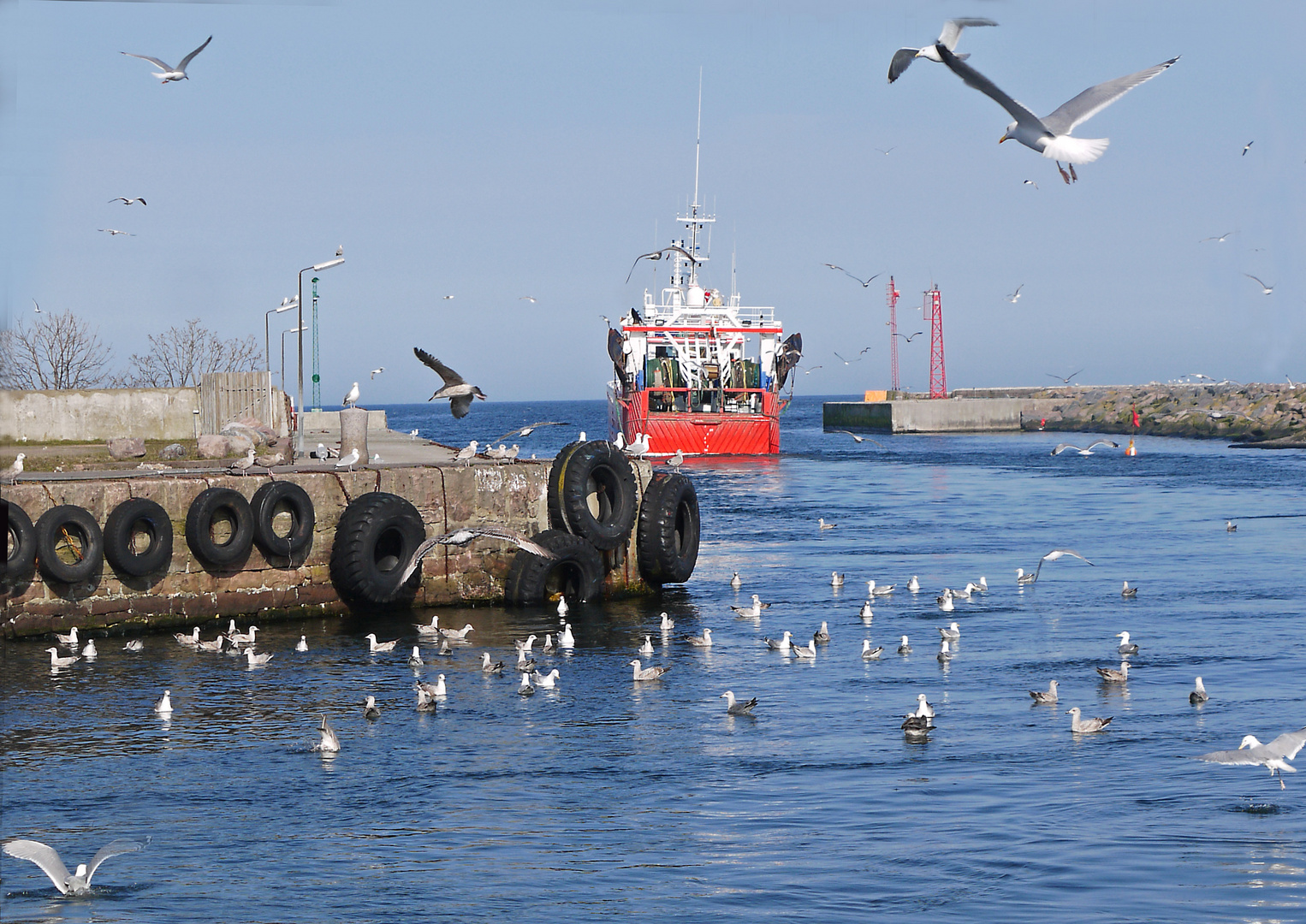 Möwen im Hafen von Nexö