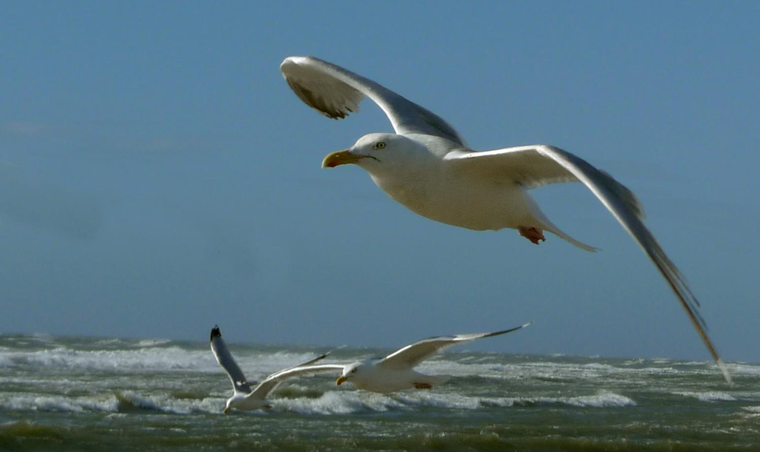 Möwen im starken Wind