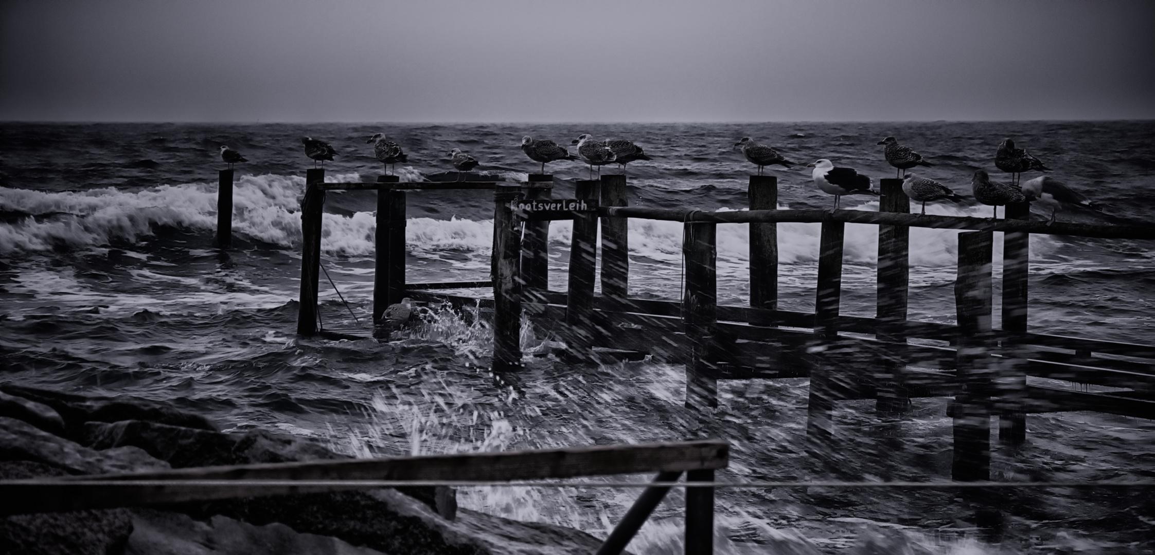 Möwen im Sturm