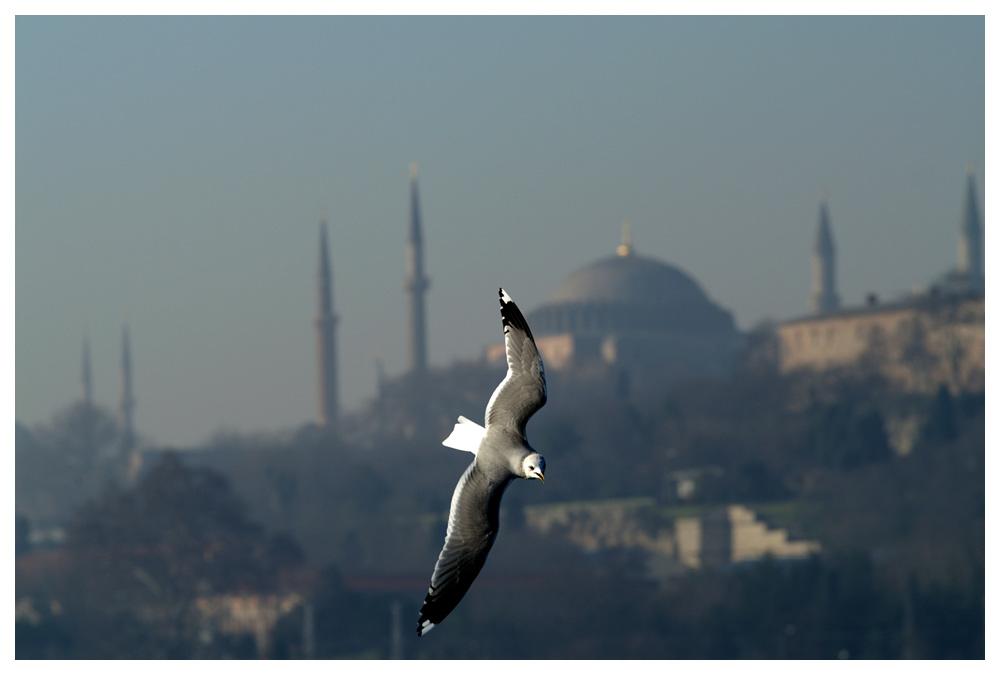 Möwen in Istanbul, Sultanahmet im Hintergrund