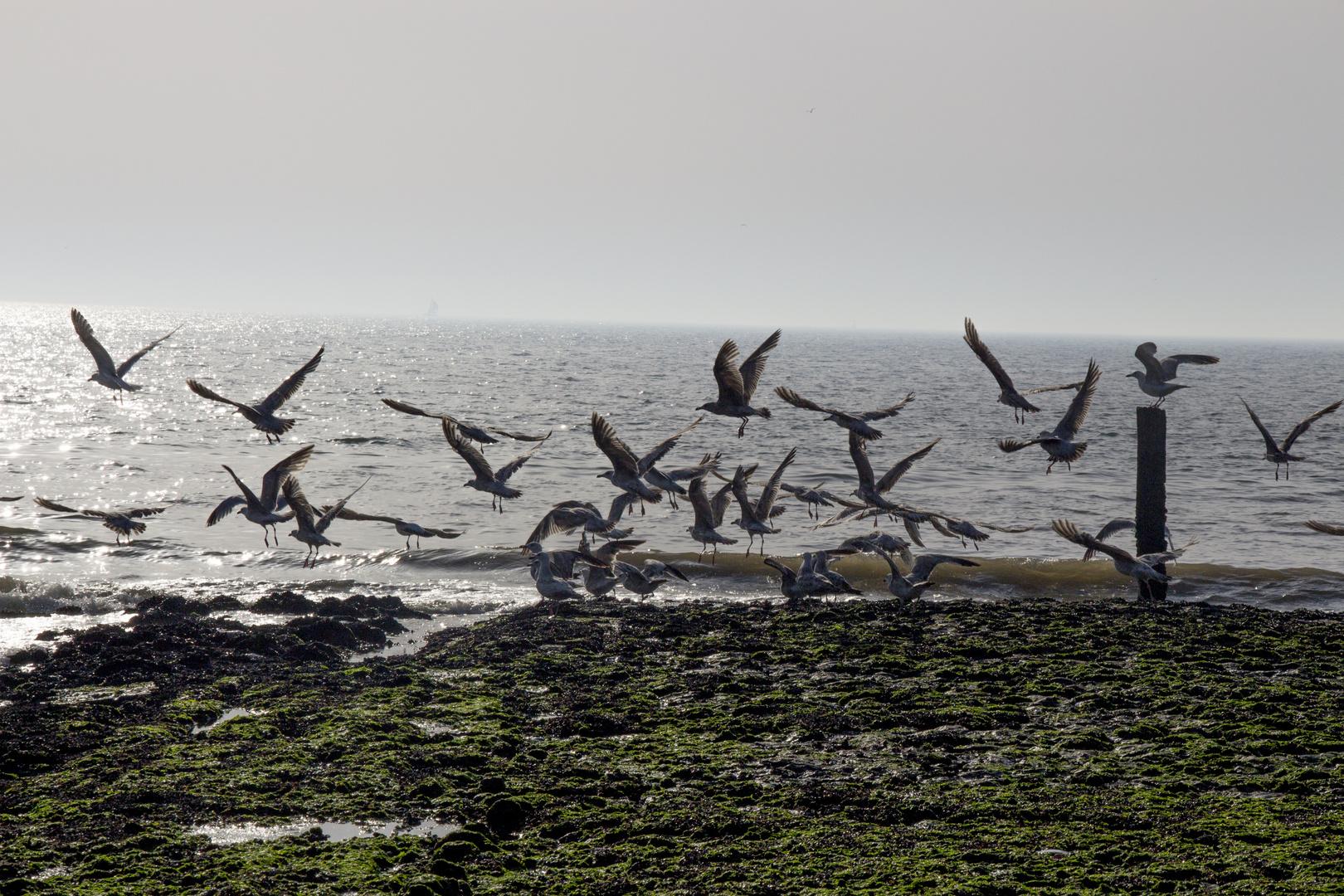 Möwen in Petten am Meer