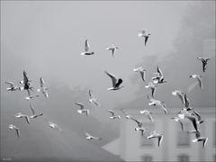 Möwenschwarm im Nebel