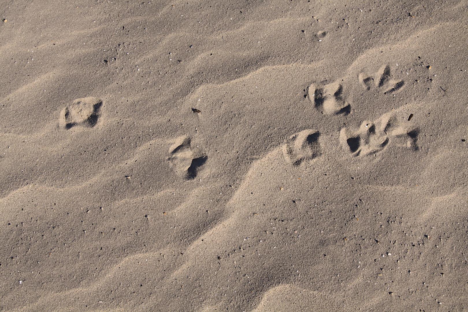 Möwenspuren im Sand