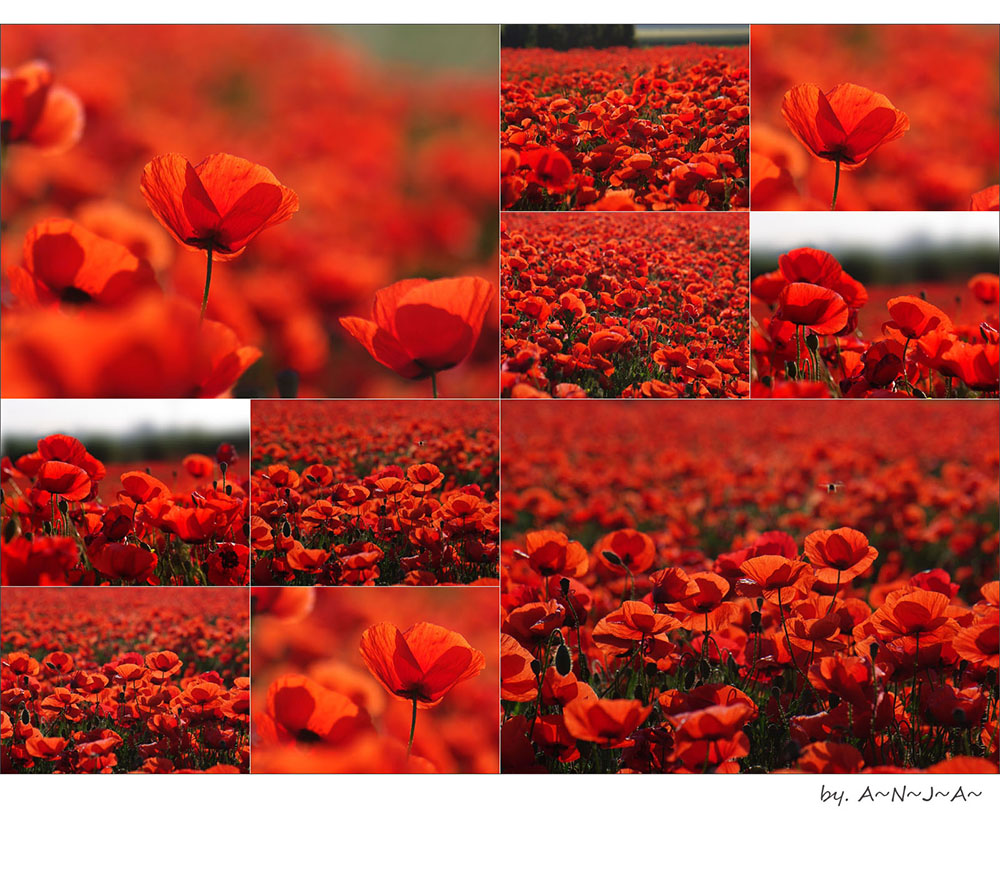 * Mohn- feelings...*