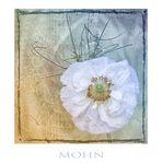 Mohn -Variation2