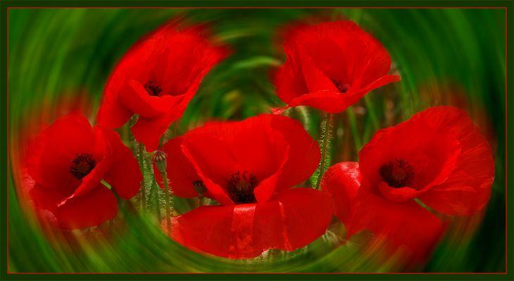 Mohnkarussell - rot – grün oder ich seh rot