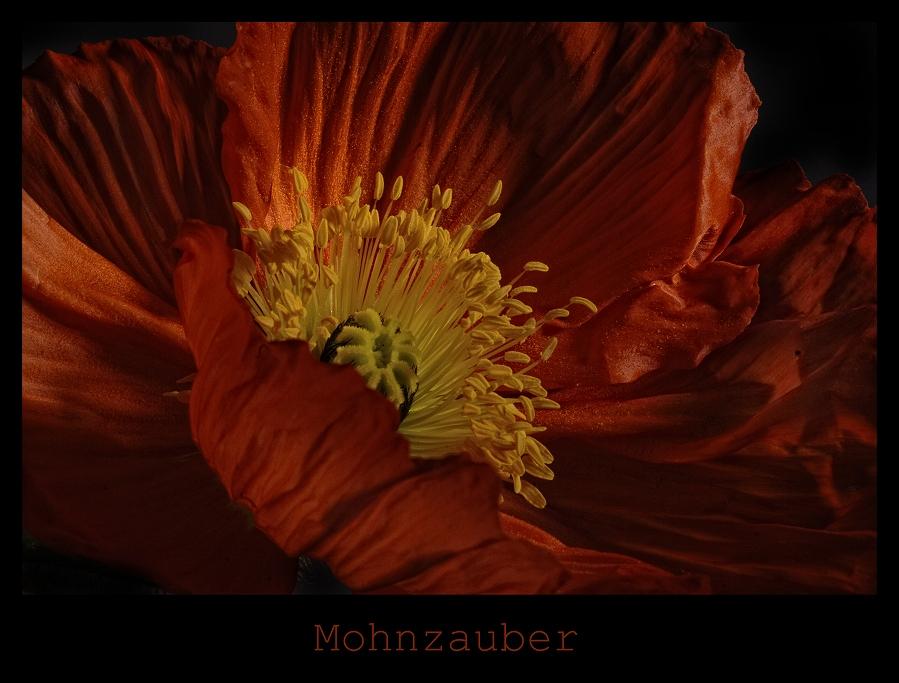 Mohnzauber XVII