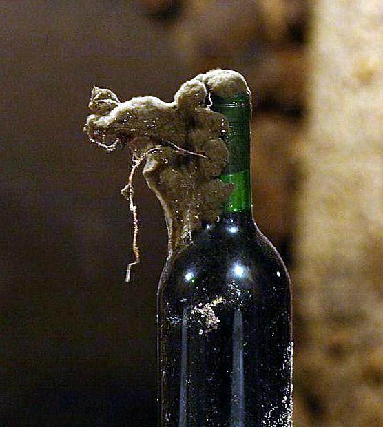 moho y vino