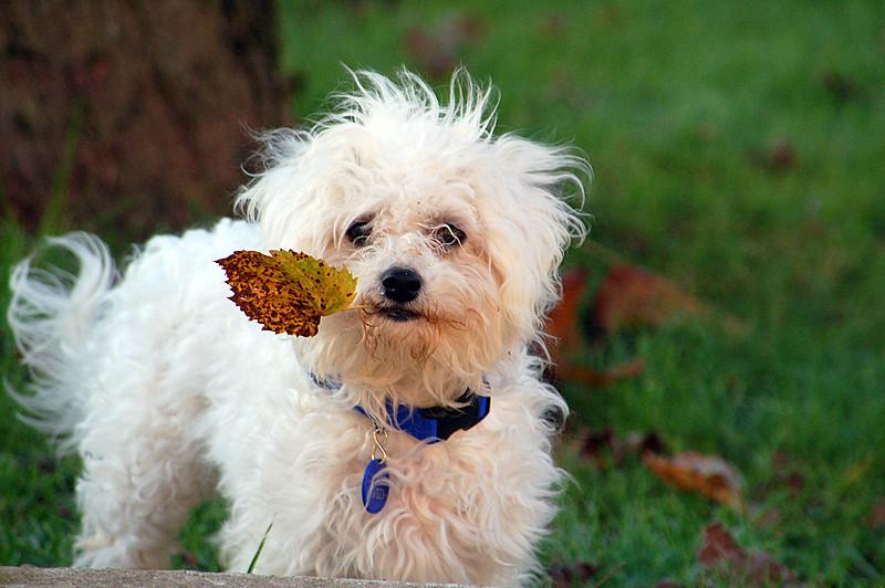 Moi aussi je ramasse les feuilles !
