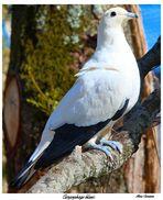 Moi ...un pigeon??? laissez moi ...rire!