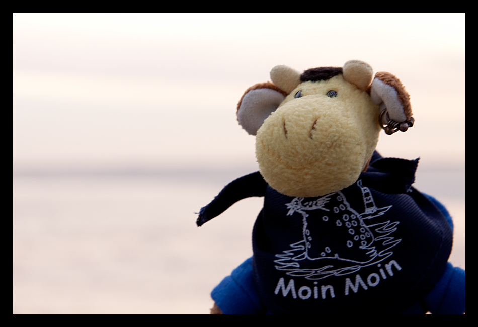 Moin Moin