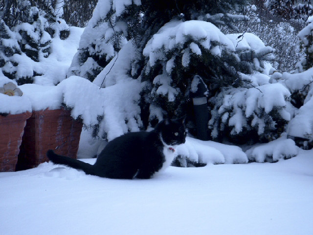 Molli im Schnee