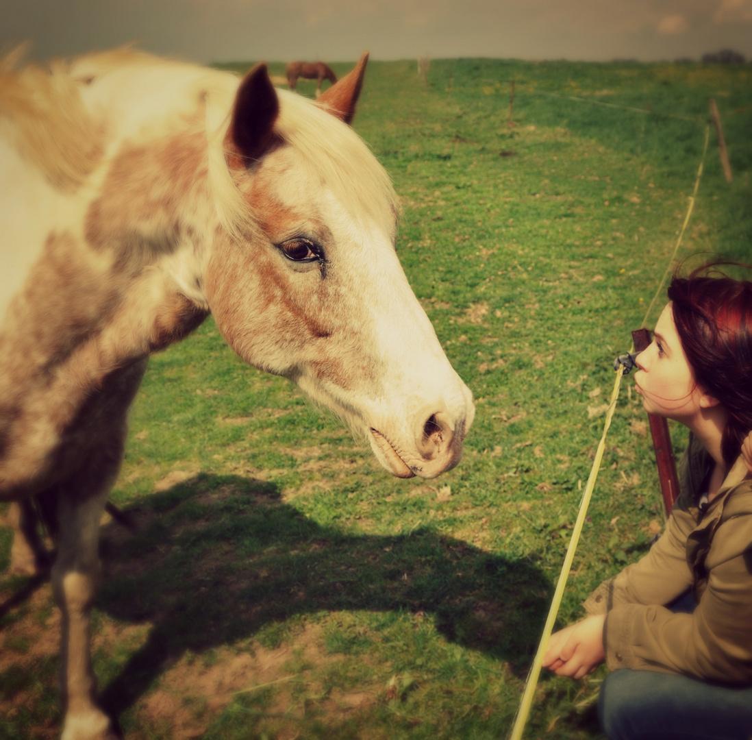 Momentaufnahme  Tier und Mensch  Pferd