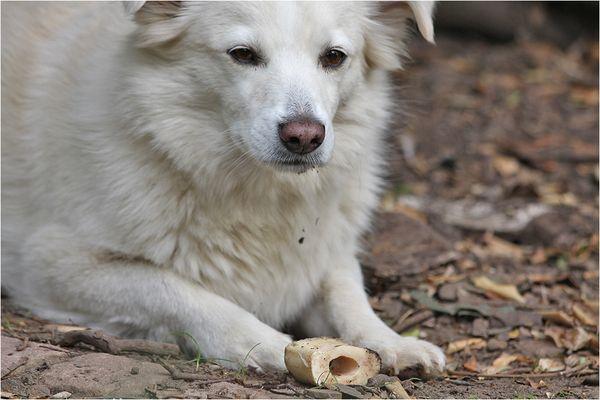Momo mit Knochen