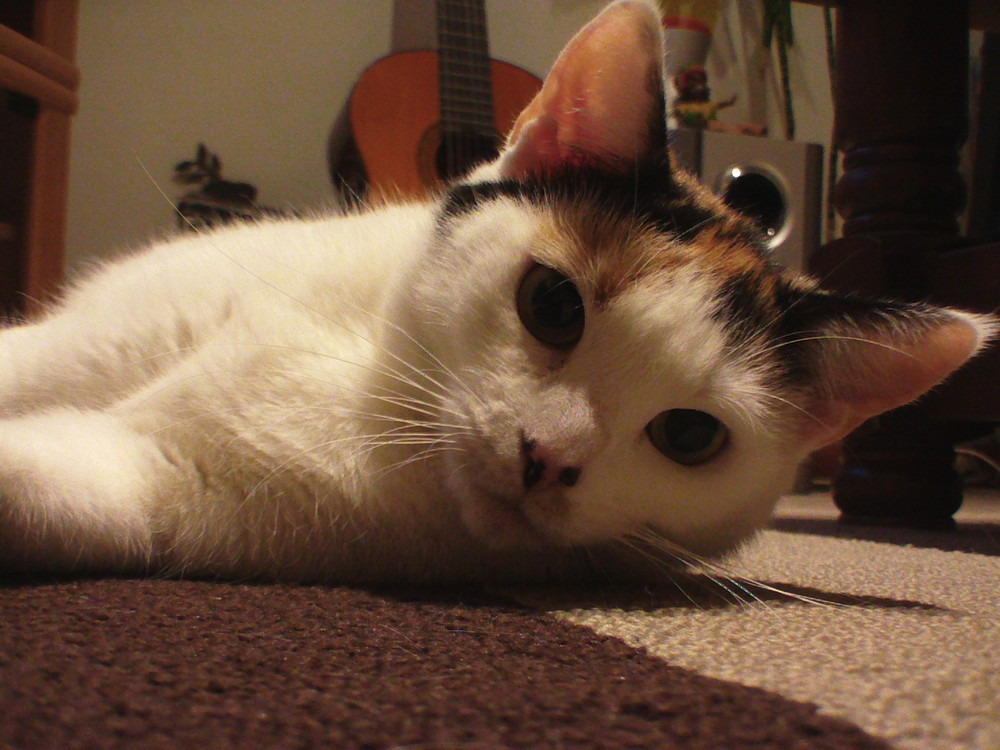 Mon adorable chat!!!!
