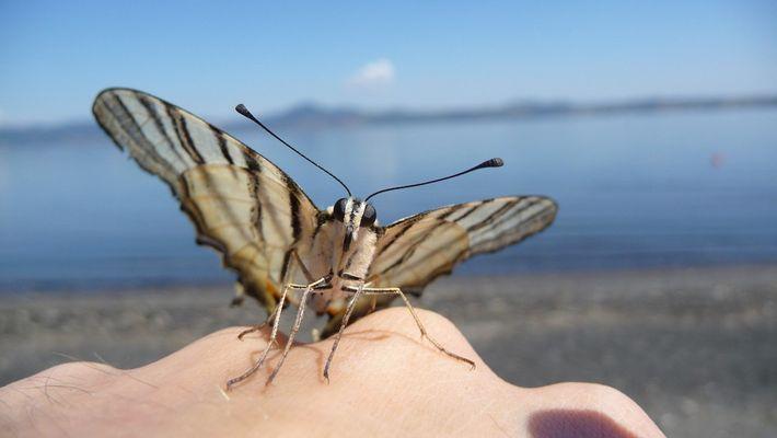 Mon ami le papillon