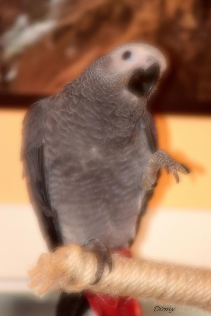 Mon amour de perroquet 2...