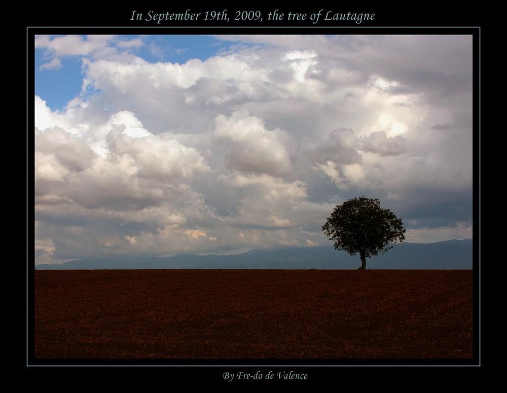mon arbre le 19 septembre