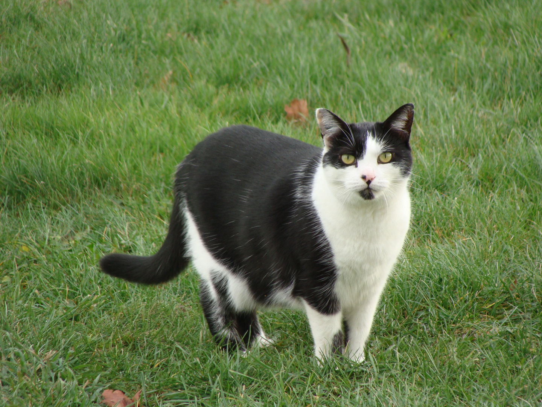 Mon chat 2