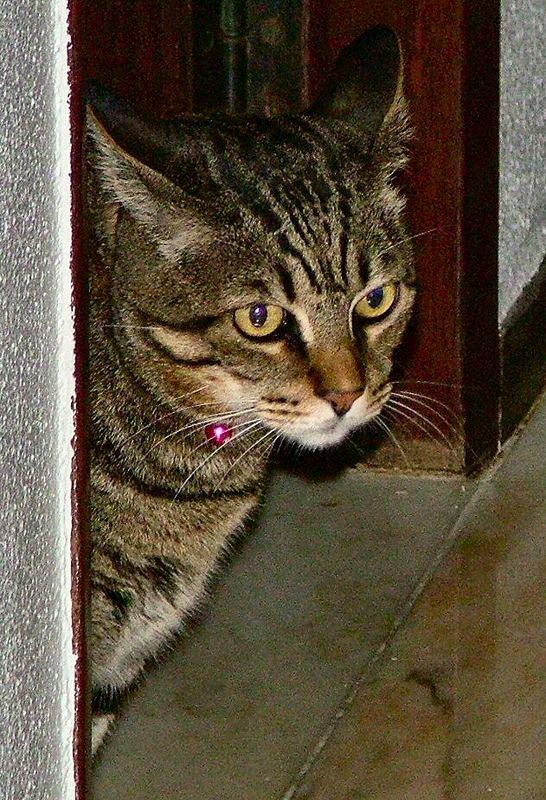 Mon chat adoré SONECA