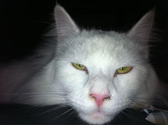 mon chat....
