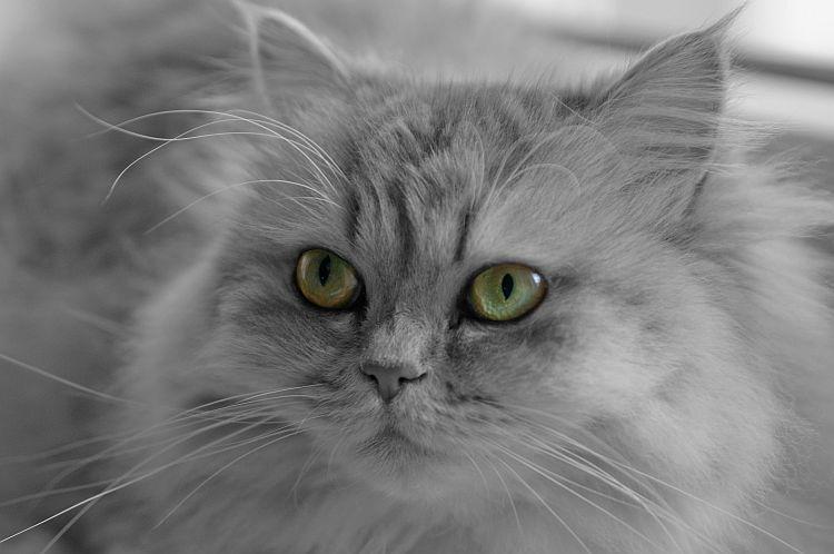 Mon chat Bahia