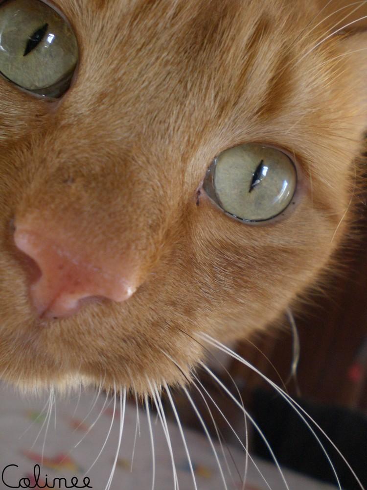 Mon chat.