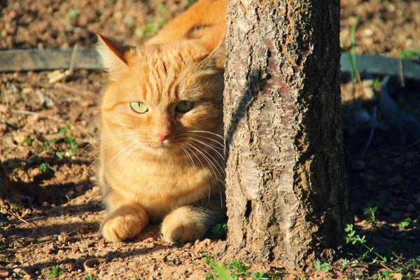 Mon chat, Churros.