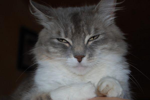 mon chat lilo
