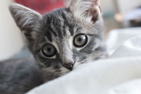 Mon chat, Marley bébé.