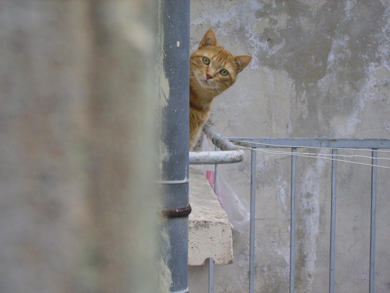 Mon chat Simba