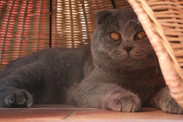 Mon chat Toubib