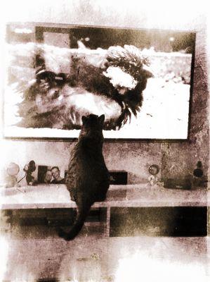 Mon chaton devant arte, emission sur les moineaux