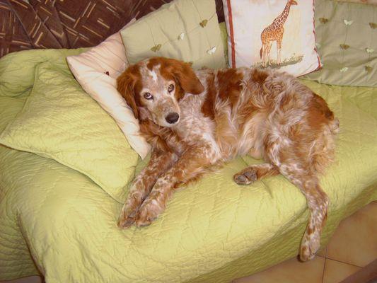 mon chien 13 ans