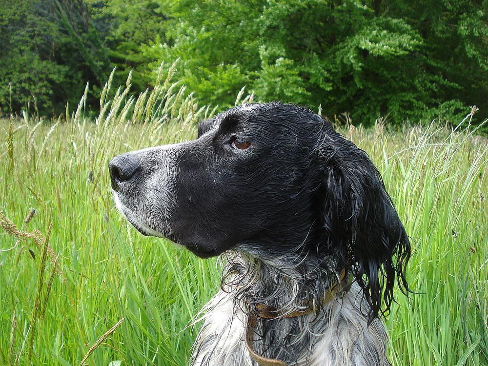 mon chien bradock
