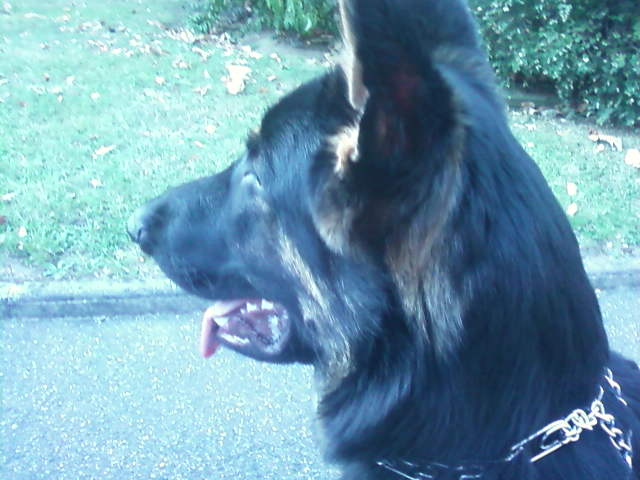 mon chien ekon de la legende de mahorie