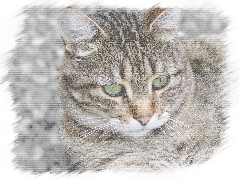Mon gros chat titeuf...