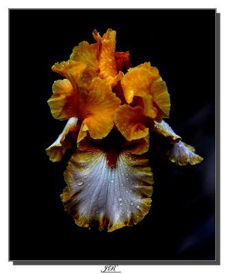 Mon Iris à moi !!!