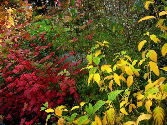 Mon jardin d'automne