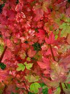 Mon jardin d'automne 10