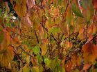 Mon jardin d'automne2