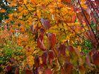 Mon jardin d'automne3