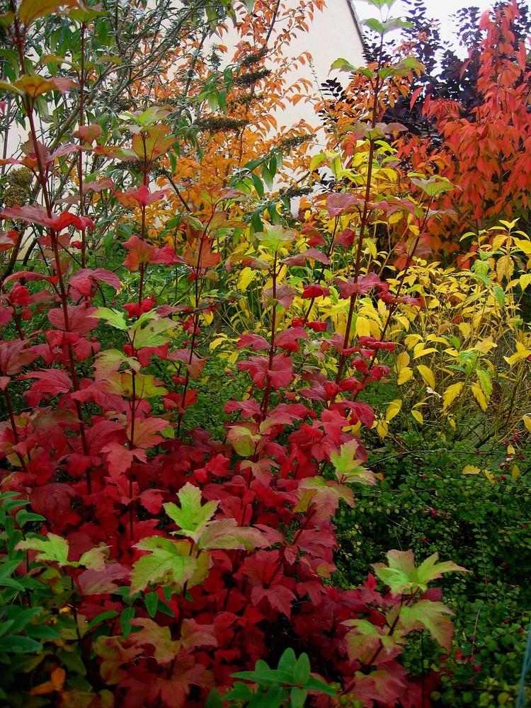 Mon jardin d'automne4