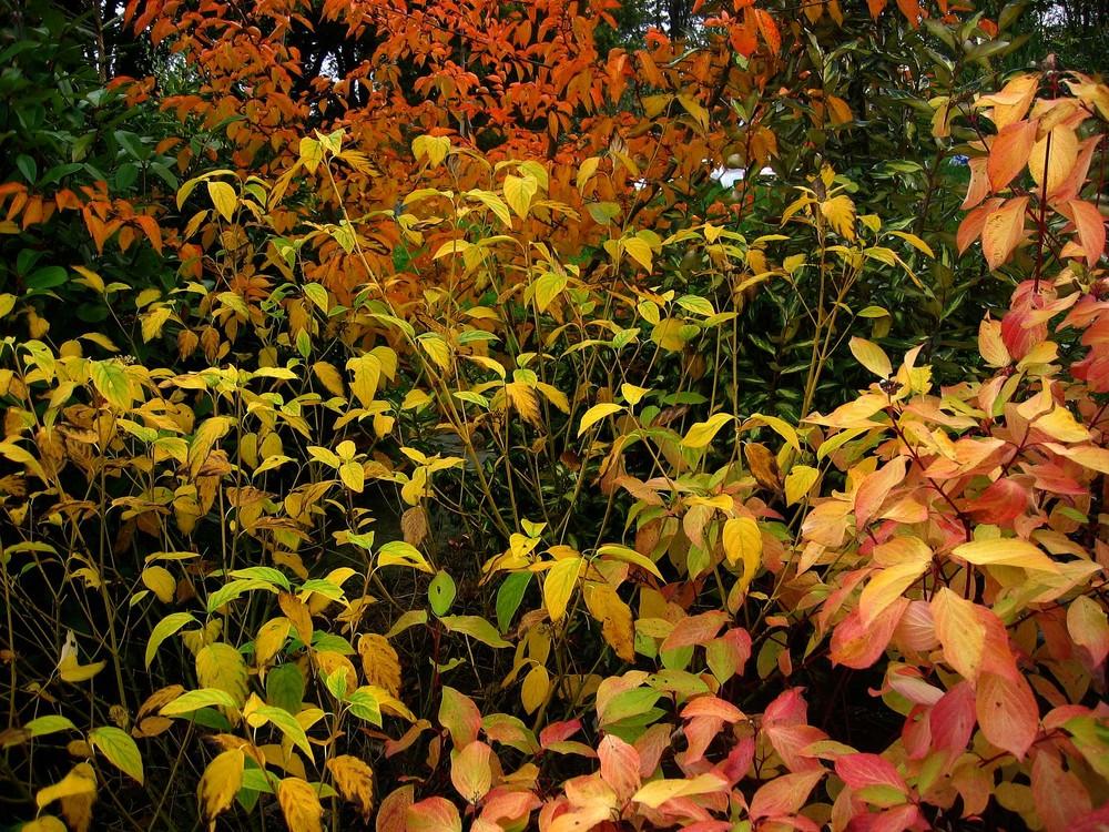 Mon jardin d'automne5